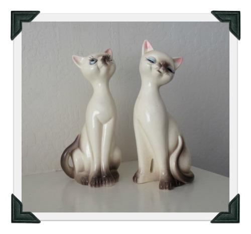 siamese-cats1