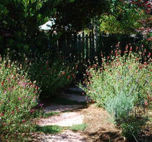 gardenpath-WEB