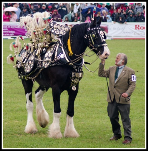 horse-brass-competition