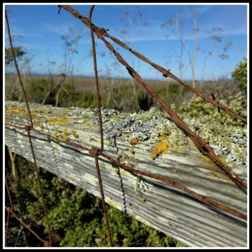 lichen-wire