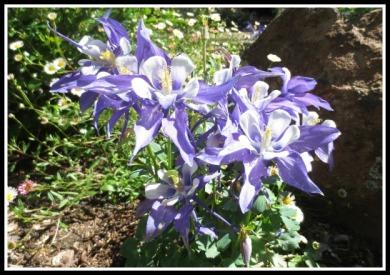 april-flowers1