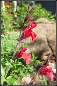 april-flowers2