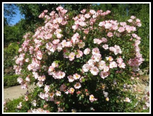 Filoli-Gardens
