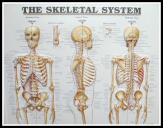 blog-skeleton-posters