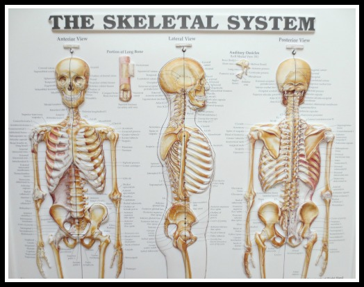blog-skeleton-posters